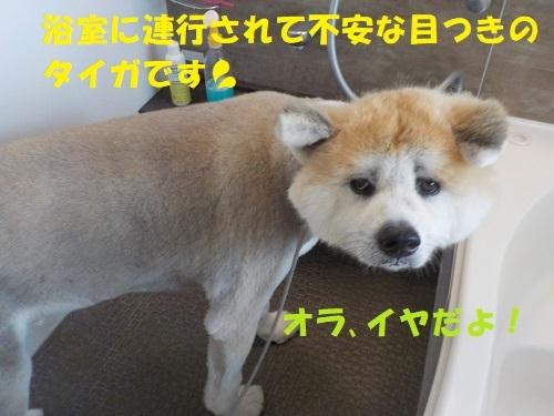 f0121712_01130734.jpg