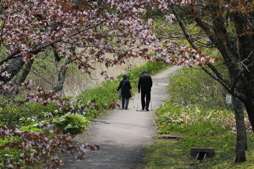 令和桜もあとすこし 5月19日_f0113639_18203365.jpg