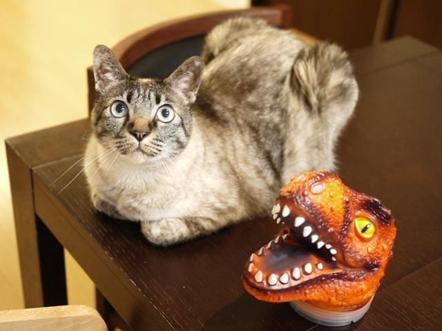 猫のお留守番 ルノーちゃん編。_a0143140_22425599.jpg