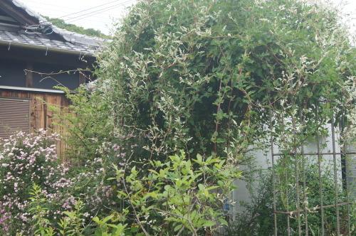 5月オープンガーデン終了_e0181373_21551796.jpg