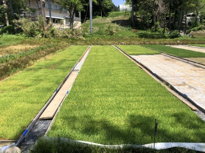 新緑の季節。田植えシーズンです。_d0182179_16391061.jpg