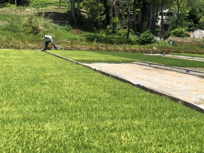 新緑の季節。田植えシーズンです。_d0182179_16422351.jpg