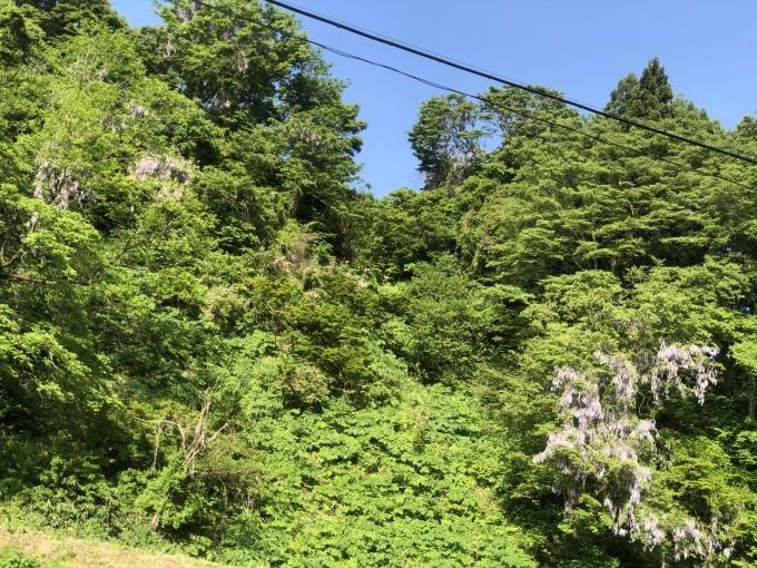 新緑の季節。田植えシーズンです。_d0182179_16470172.jpeg