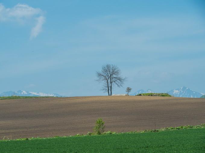 5月お気に入りの風景~残雪の日高山脈と新緑の丘陵地~_f0276498_18380856.jpg
