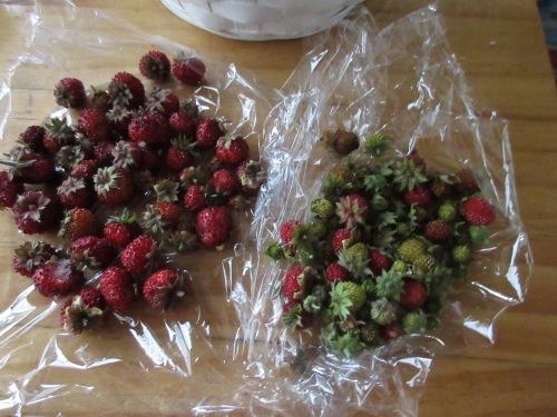 イチゴ真っ盛り、サクランボもちょっとだけ。_e0341401_00373126.jpeg