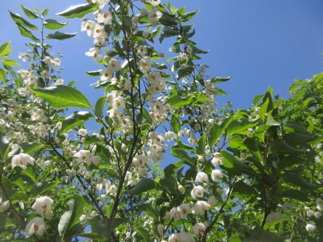ノヂシャの種子を採る・自家製葡萄パン_a0203003_16051973.jpg