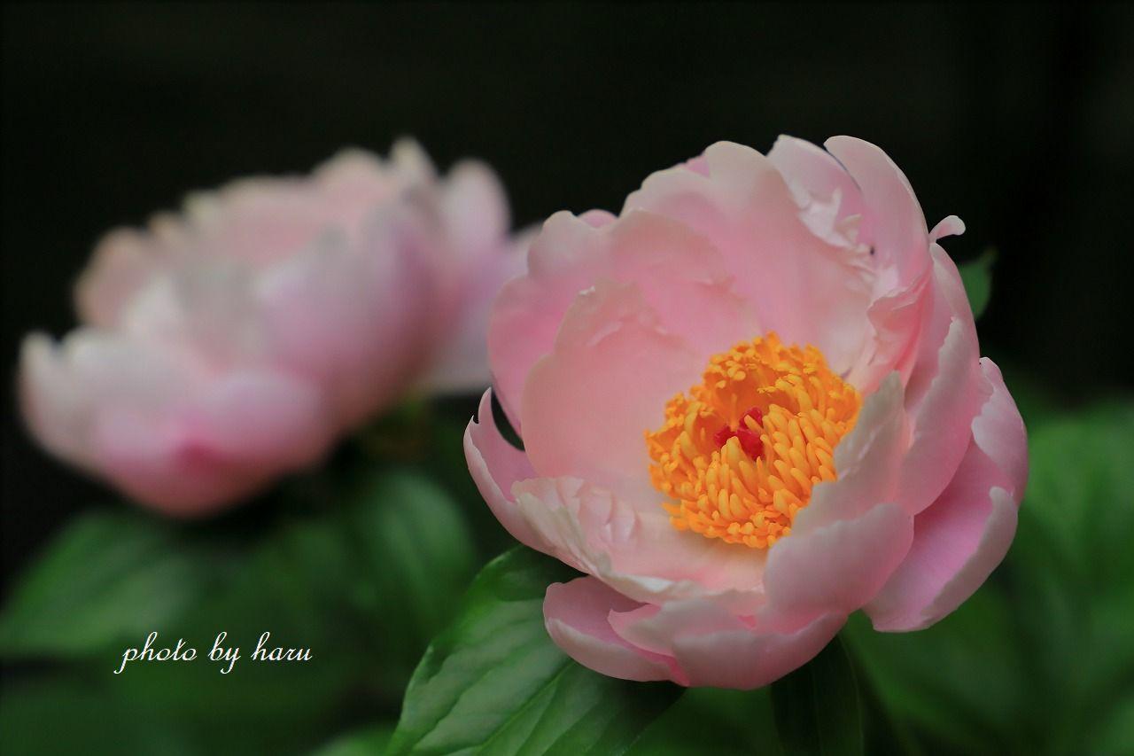 今日も咲きました_f0297537_16123110.jpg