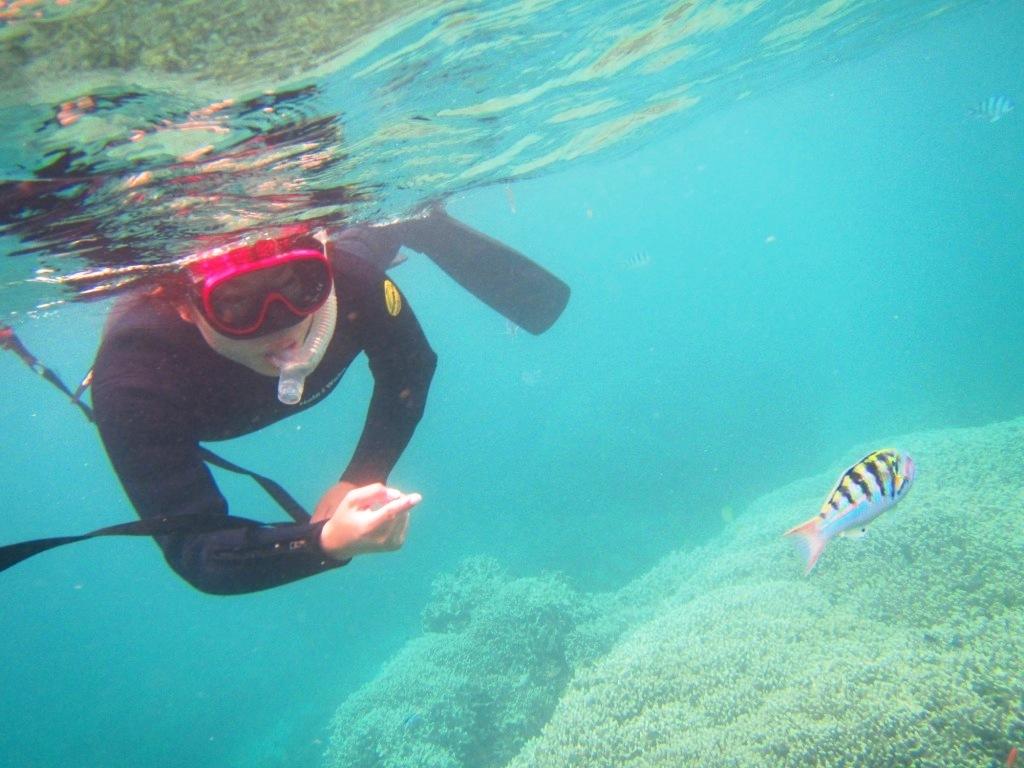 Finding sea turtle !!_a0189838_17045504.jpg