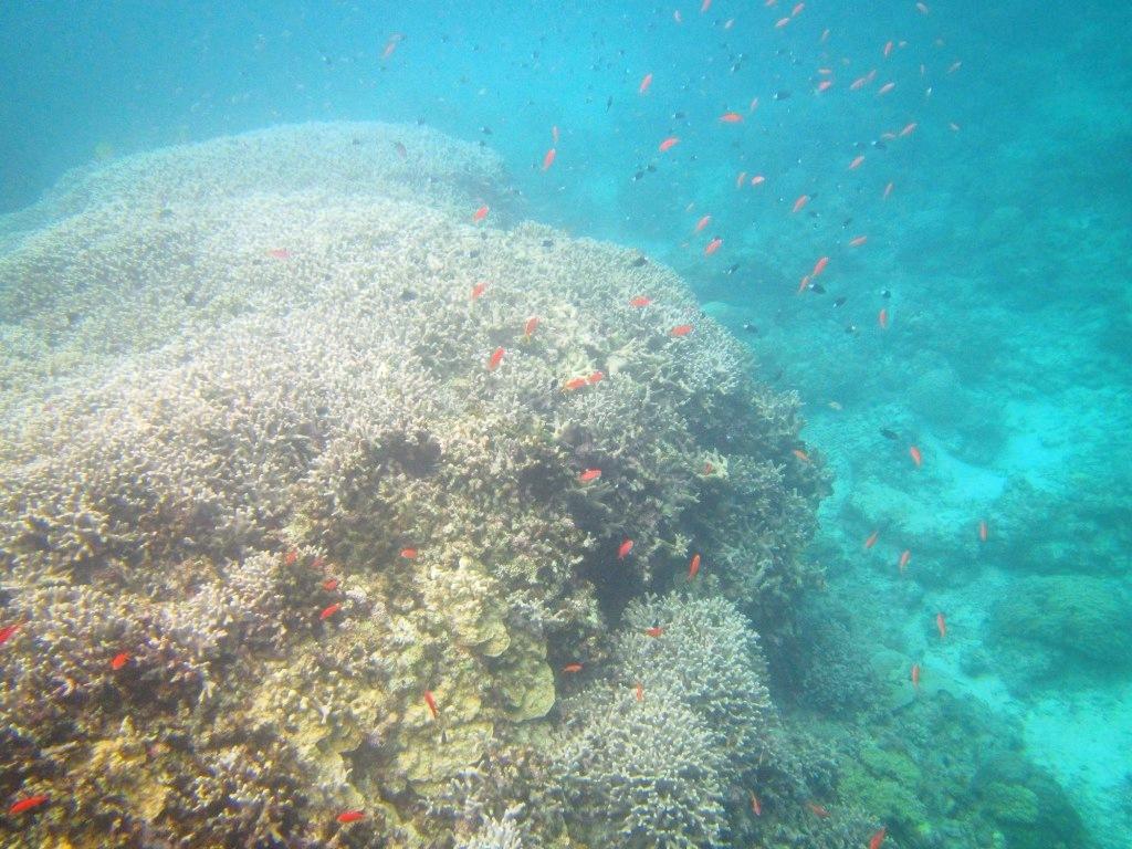 Finding sea turtle !!_a0189838_17061834.jpg