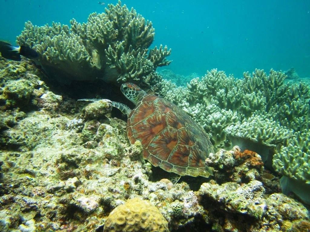 Finding sea turtle !!_a0189838_17081233.jpg