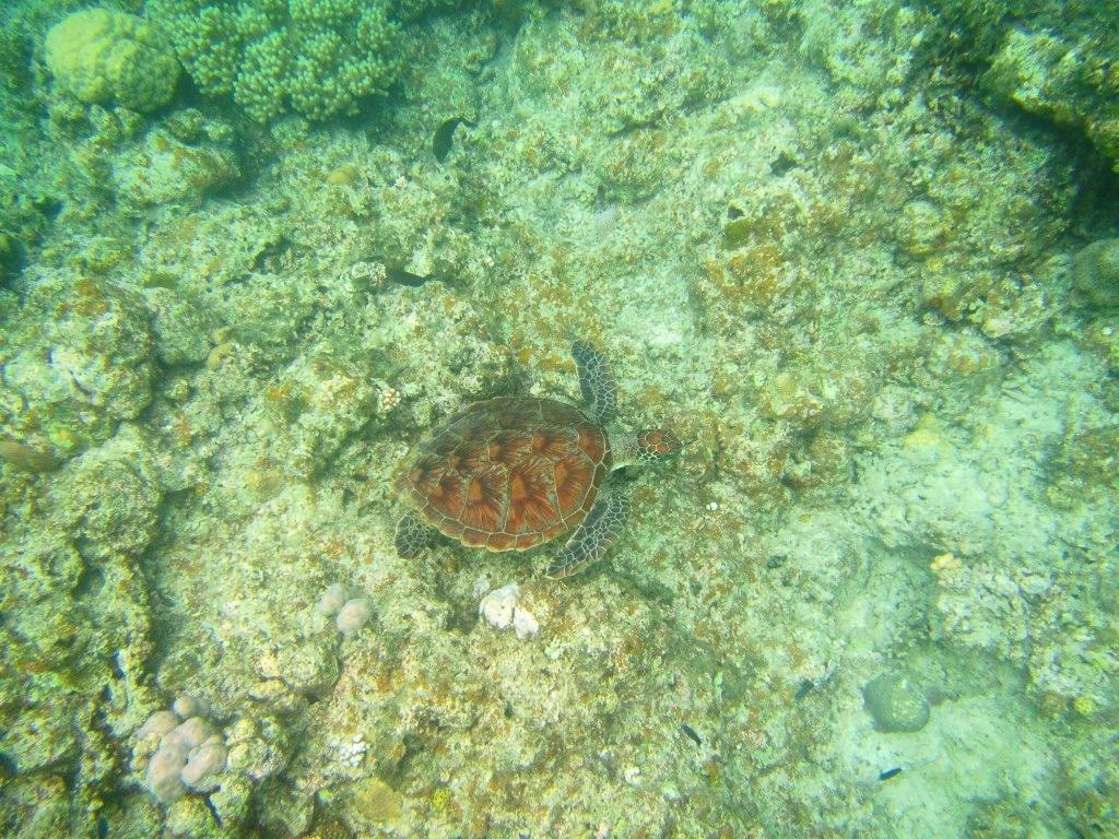 Finding sea turtle !!_a0189838_17092271.jpg