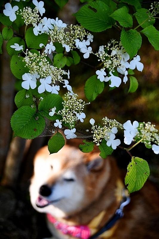 花の名前が分からない_b0314043_09071296.jpg