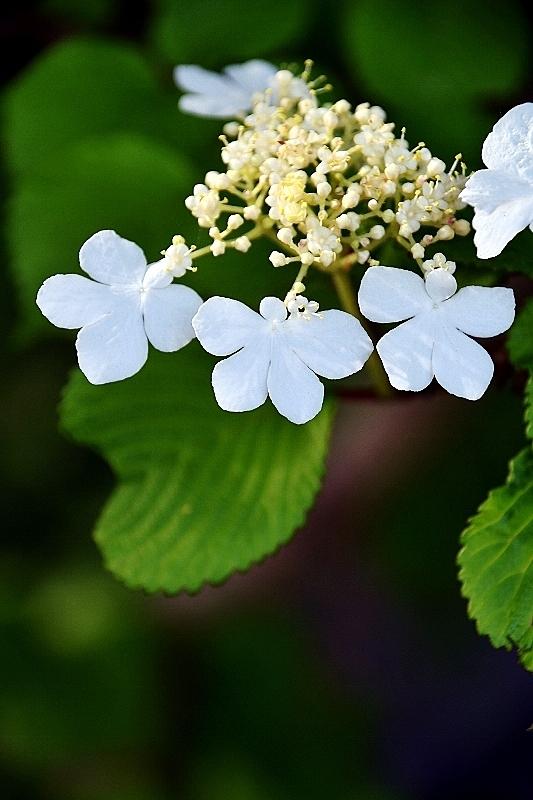 花の名前が分からない_b0314043_09073596.jpg