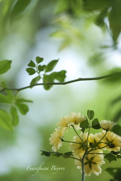 公園の花 **_d0344864_20543517.jpg