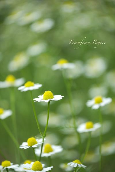 公園の花 **_d0344864_20544073.jpg