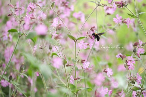 公園の花 つづき **_d0344864_21130931.jpg
