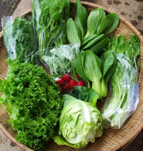今週の野菜セット(5/21~5/25着)今シーズン初回です!_c0110869_12231354.jpg