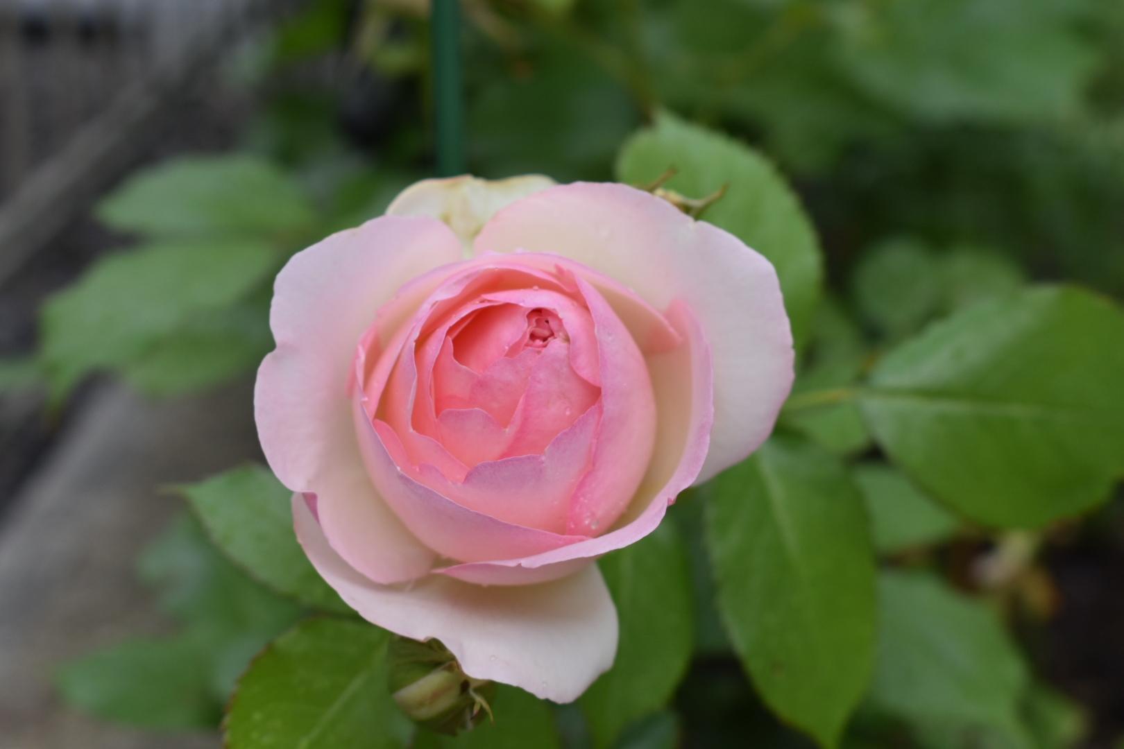 春爛漫。_f0098671_07563098.jpg
