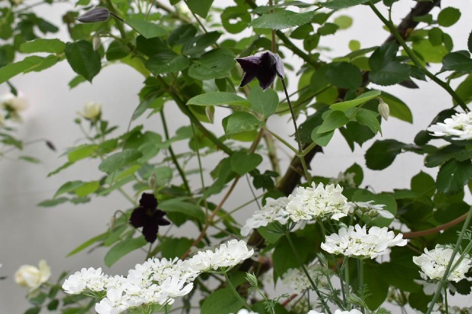 春爛漫。_f0098671_07570067.jpg