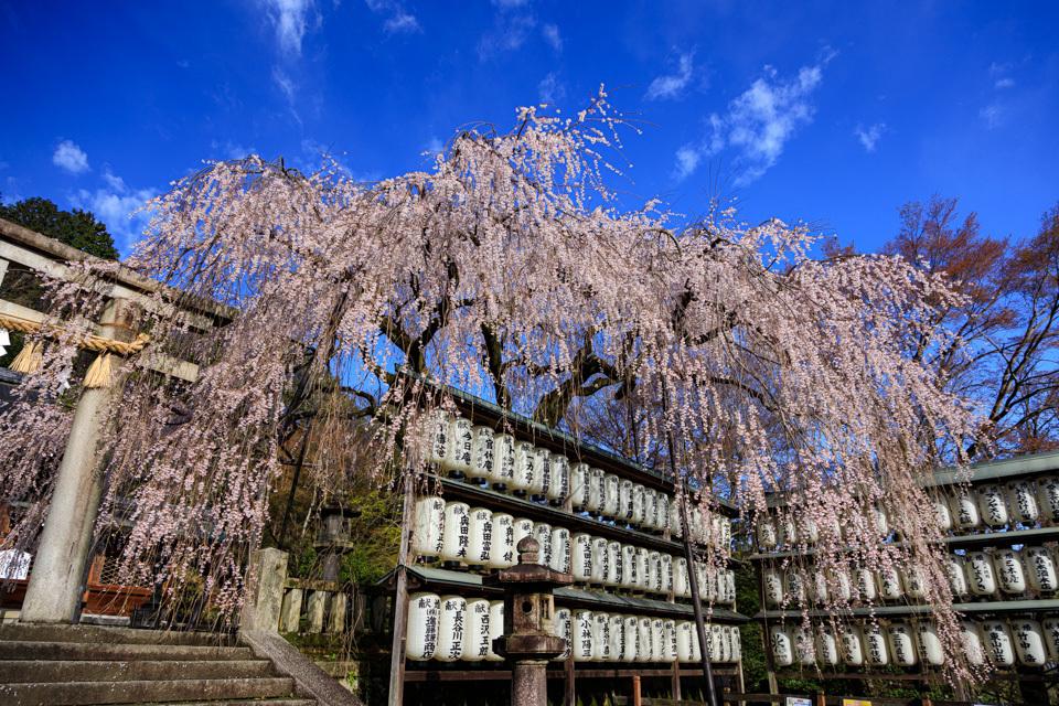 桜 2019!  ~大石神社~_b0128581_20204845.jpg