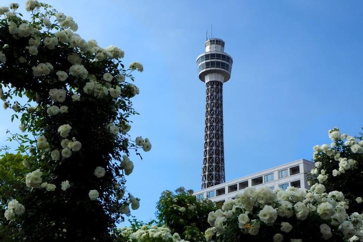 どこへ行っても横浜は花盛り_e0305388_00000527.jpg