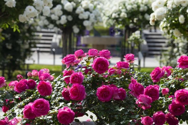 どこへ行っても横浜は花盛り_e0305388_00013453.jpg