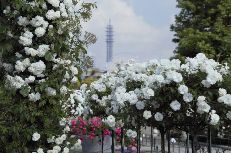 どこへ行っても横浜は花盛り_e0305388_00262254.jpg