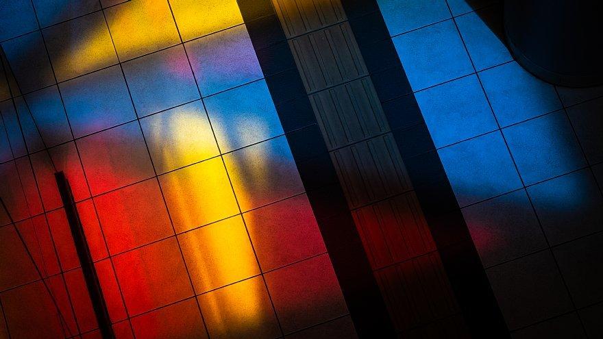 皐月の陽光に踊る原色の光蜥蜴たち_d0353489_20231128.jpg