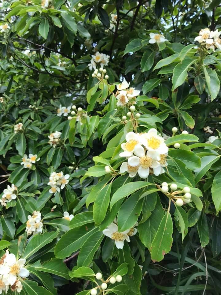 春のはちみつ 採蜜していってます_a0247891_16351868.jpg