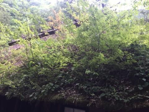 春の  みたき園_e0115904_13044813.jpg