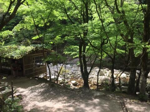 春の  みたき園_e0115904_16110970.jpg