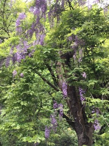 春の  みたき園_e0115904_16122868.jpg