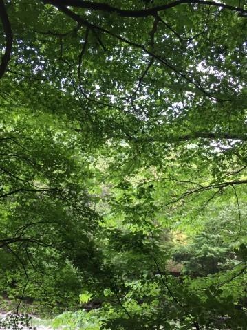 春の  みたき園_e0115904_16154656.jpg