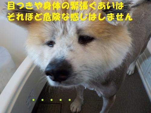 ハラハラしたシャンプータイム(^^;)_f0121712_00561228.jpg