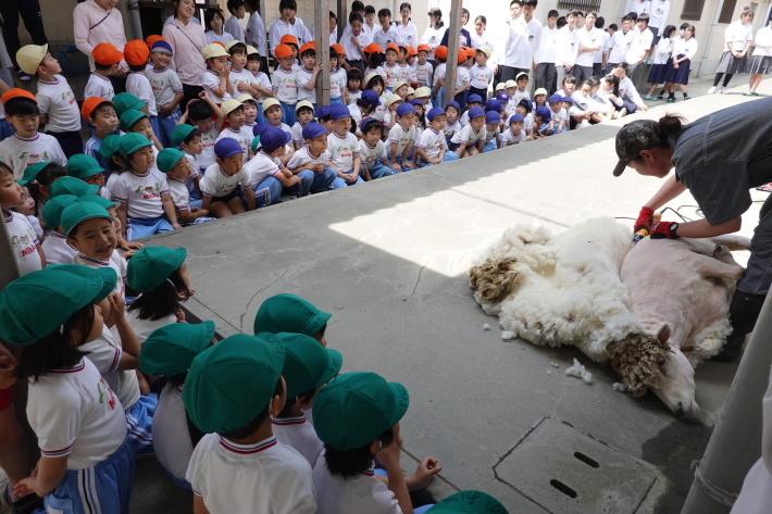 羊の毛刈り_a0212624_16593018.jpg