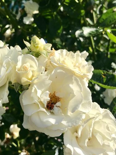 開花 Blooming〜プレゼント編曲は_e0103327_18063712.jpg