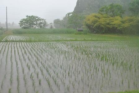 激しい雨_a0123836_13362270.jpg