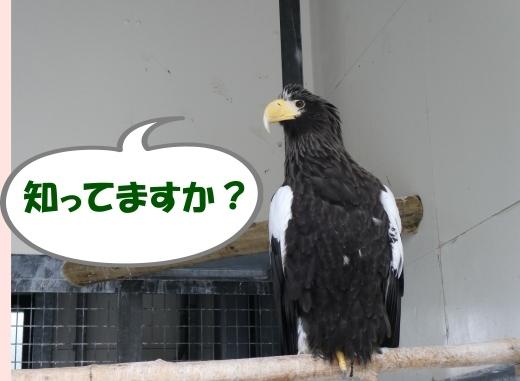 函館公園ニュース  5月21日(火)_e0145841_15583565.jpg