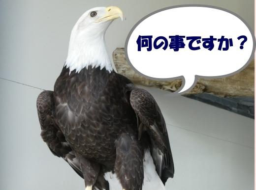 函館公園ニュース  5月21日(火)_e0145841_15584092.jpg