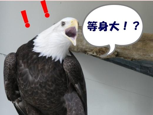 函館公園ニュース  5月21日(火)_e0145841_15584560.jpg