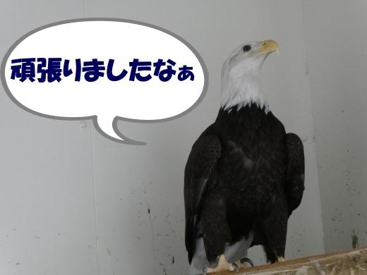 函館公園ニュース  5月21日(火)_e0145841_15585575.jpg