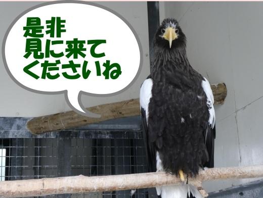 函館公園ニュース  5月21日(火)_e0145841_16193437.jpg