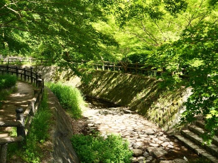 紀仙郷もみじ谷公園  2019-05-26 00:00_b0093754_20104881.jpg