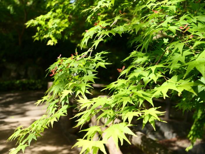 紀仙郷もみじ谷公園  2019-05-26 00:00_b0093754_20120113.jpg