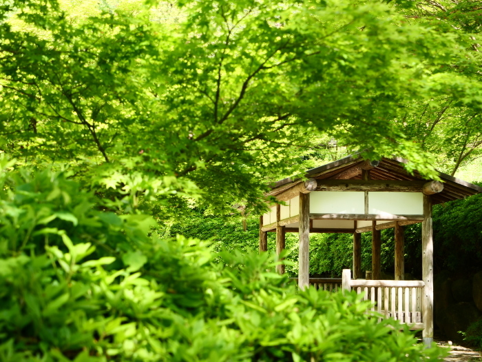 紀仙郷もみじ谷公園  2019-05-26 00:00_b0093754_20121497.jpg