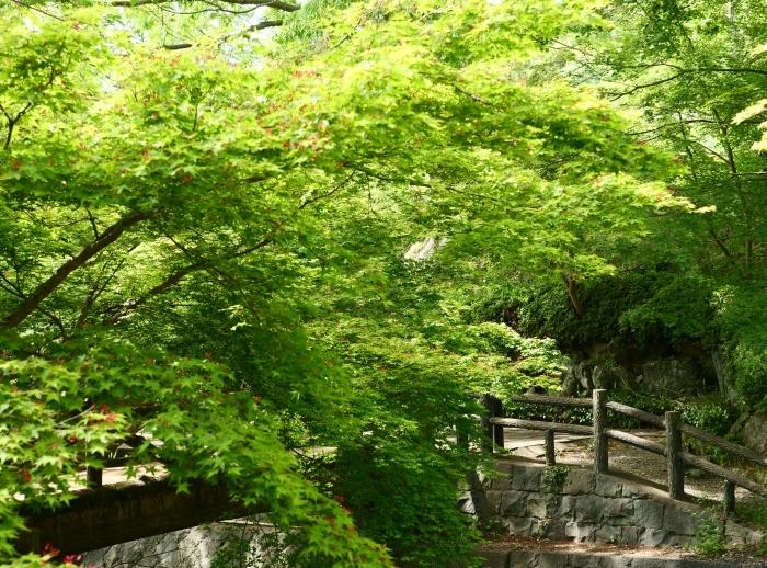 紀仙郷もみじ谷公園  2019-05-26 00:00_b0093754_20122597.jpg