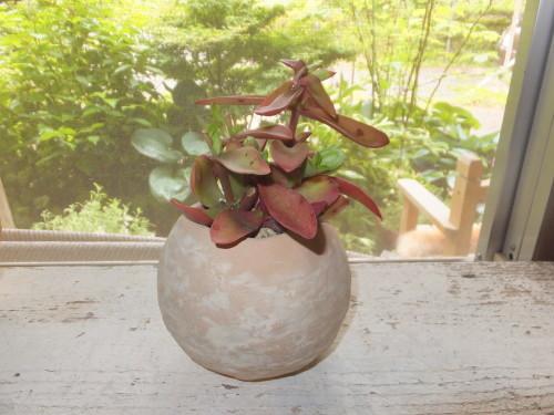 楽しい植木鉢と花器・二人展~2(記録用)_d0336460_20265748.jpg