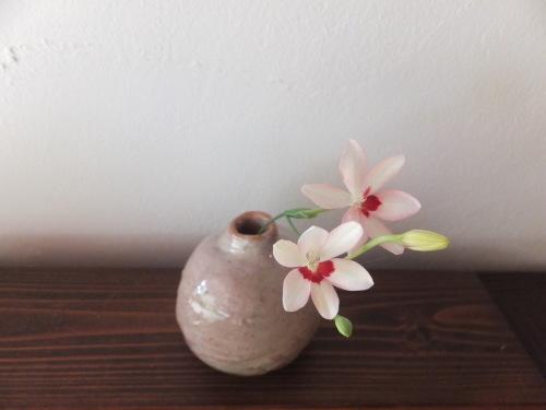 楽しい植木鉢と花器・二人展~6(記録用)_d0336460_20361511.jpg