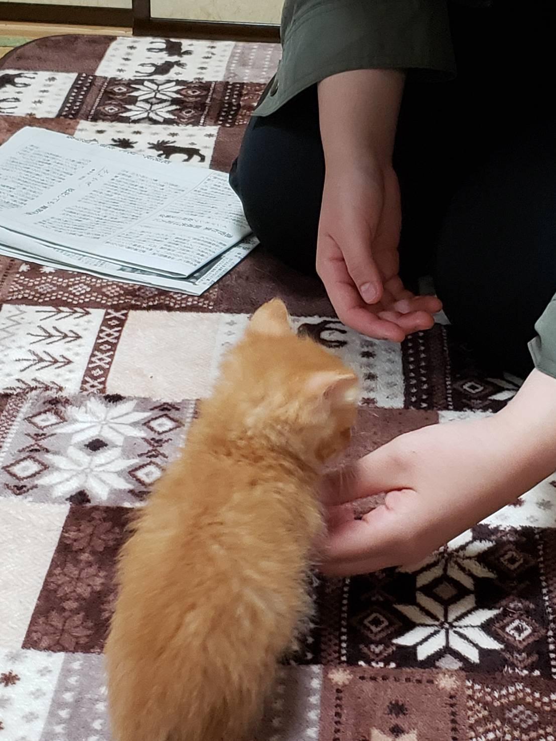 子猫のお見合い_d0179994_13244512.jpeg