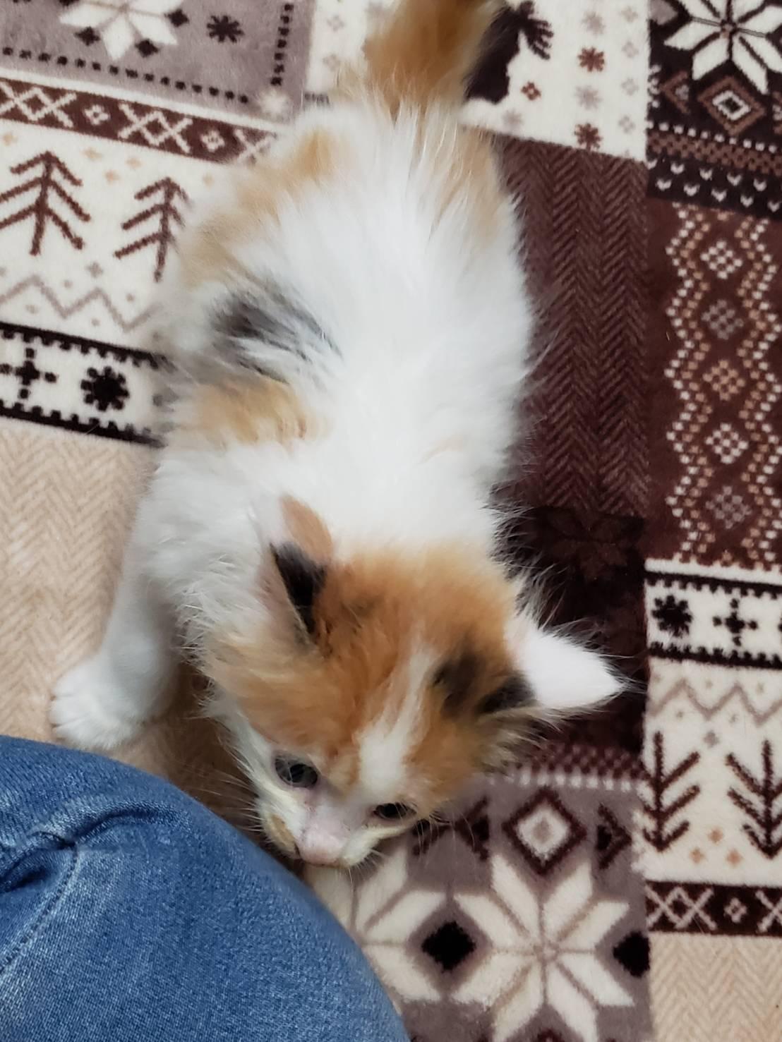 子猫のお見合い_d0179994_13260074.jpeg